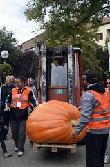 31. Dani ludaje, Kikinda (sindibiber) Tags: daniludaje kikinda pumpkin pumpkindays bundeva ludaja vojvodina banat