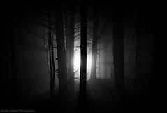 Enlightened Forest (Matt Williams Gallery) Tags: mattwilliamsphotography nikon d7100 light lightrays forest dark blackandwhite black eerie spooky woods night nightphotography fog foggy roanmountain roanhighlands roundbald appalachiantrail landscape landscapephotography fineartphotography fineart silhouette monochrome hiking