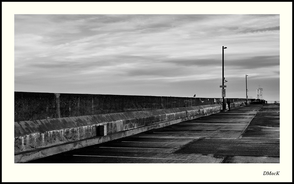 Gull on the Harbour Wall, Seahouses
