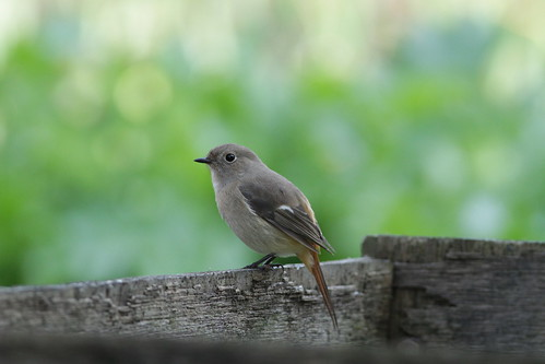 A cute bird by Takashi(aes256), on Flickr