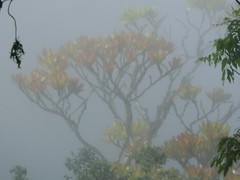 De aquella bsqueda que hicimos juntos (bichocu) Tags: tree fog arbol selva bolivia jungle niebla madidi