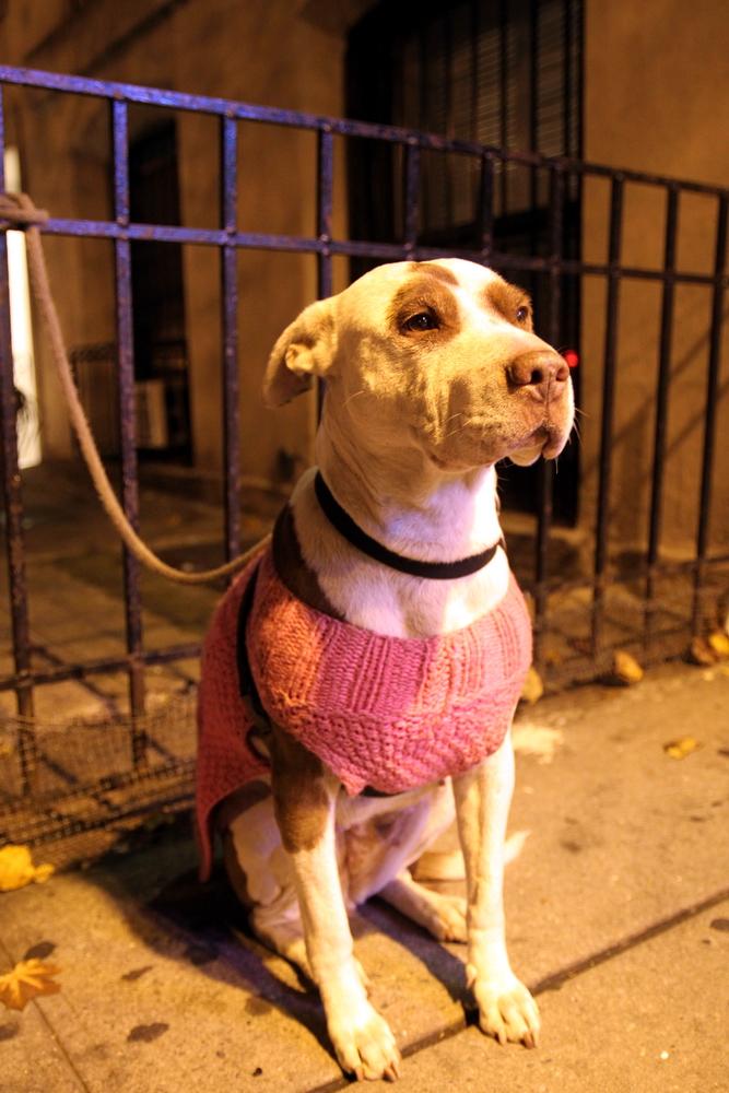 puppysweater