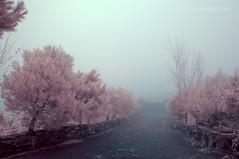 Entre la niebla - IR 720nm (El Gran Toeti) Tags: madrid mist muro fog azul ir puerta nikon arboles camino cuento rosa 1855 pinos niebla misterio torrelaguna 720 d40 torremocha greenl berrueco alopezm antoniolopezmurillo lostomillares