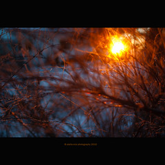 My Favorite Star (stella-mia) Tags: winter light sunset sun snow blur hot cold lumix fire star evening frost dof bokeh panasonic explore pancake 20mm frontpage sn gf1 hightlight dmcgf1