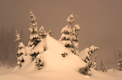 Illuminating the Fog (Deby Dixon) Tags: travel trees winter snow tourism nature fog outdoors photography washington nikon paradise adventure snowshoeing magical deby allrightsreserved illuminate 2010 dense mtrainiernationalpark naturephotographer debydixon debydixonphotography