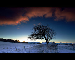 Avie Rowan Winter (angus clyne) Tags: winter snow cold tree scotland frost highland rowan aviemore verycold cairngorm avielochan veryverycold iamfedupwiththecold fthiscoldweather