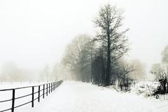 (Mah Nava) Tags: schnee trees winter bw snow cold fog germany deutschland blackwhite nebel schwarzweiss kalt bume    thepowerofnow