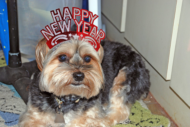 This is a picture of Snickers the dog from the New Year's party in 2010.