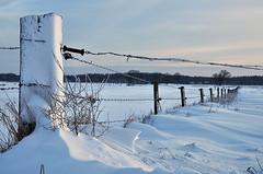 Snow and barbed wire (Jan Visser Renkum) Tags: winter snow sneeuw