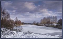 Kromboomsveld-4370 (Daytona1961 http://awd-daytona.blogspot.com/) Tags: sky snow birds landscape swan zonsondergang sundown sneeuw natuur lucht duinen riet awd landschap amsterdamse buizerd ekster zwanen damherten