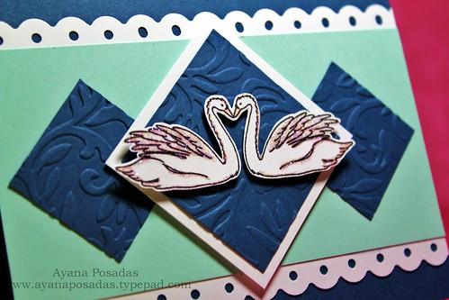 Swans Love (2)