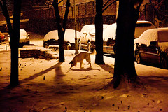 . (tamo neki) Tags: winter belgrade beograd thelittledoglaughed