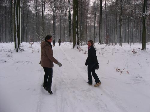 Promenade dans la forêt de Soignes