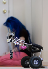 Day 33 of 365 - Year 2 (wisely-chosen) Tags: selfportrait me january custom bluehair dogwheelchair cameraraw 2011 dogcart 365days naturallycurlyhair eddieswheels curlformers tamronaf90mmf28dispam11macrolens adobephotoshopcs5extended