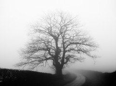 (Max Nathan) Tags: leica blue winter blackandwhite white snow black cold tree art fog haze branches hedge lane network nerves spectral hedgerow