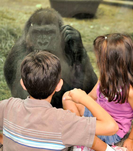 gorilla encounter 5
