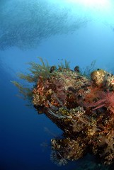 Bali diving Dive Concepts_069