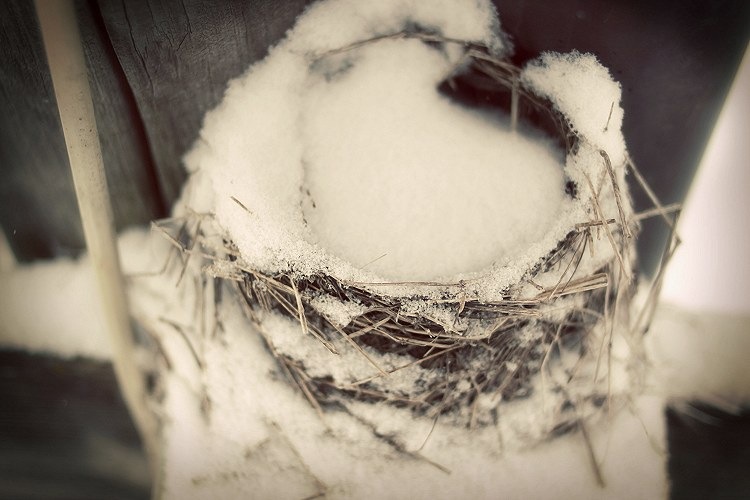 01-10-nest
