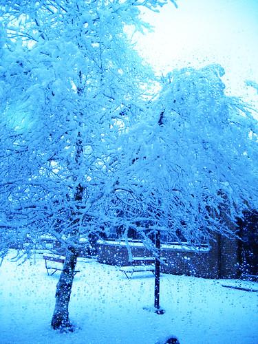 Snow (175)