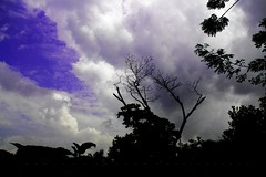 Compare and Contrast _ The Nature  [ মানুষ কি মানুষের জন্য ] EXPLORED No #55 (HamimCHOWDHURY  [Active 01 Feb 2016 ]) Tags: life red portrait sky blackandwhite cloud white black tree green nature canon eos focus colorful faces blu sony tripod surreal excellent dhaka vaio rgb bangladesh lightandshadow dlsr cameramobile 60d backabdwhite 595036 framebangladesh digombor rajsurath 158417102010