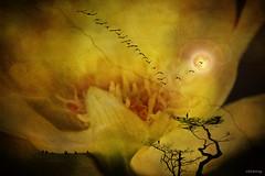 Springtime (-clicking-) Tags: people moon flower tree art texture nature floral birds silhouette photoshop idea design petals spring dof graphic natural creative cosmos springtime floralart pistils creattività