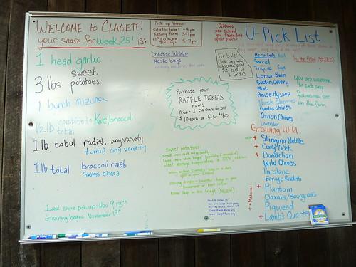 Clagett Farm Share Nov. 2 and 6 2010