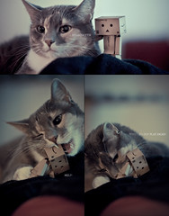 Danboard makes new friend. (Pontus Wåhlin) Tags: cat 14 poor 85mm eat kittie samyang danboard