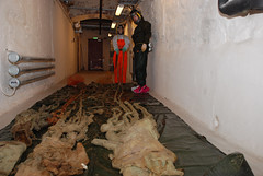 Kjempeblekksprut - Giant Squid (NTNU Vitenskapsmuseet) Tags: marin ntnu giantsquid vitenskapsmuseet kjempeblekksprut