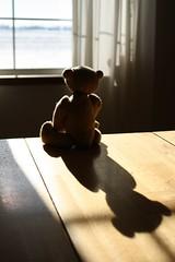Winter Sunbeam (The Craggy Moor) Tags: bear shadow brown wool jane bears sunbeam mybear craggycorner