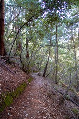 Big Basin Redwoods State Park - Along the Sunset Trail Photo