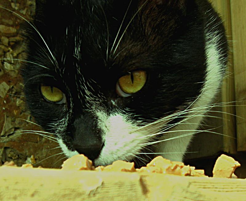 20-11-2010-ms-cat3