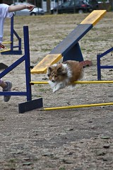 "Agility • <a style=""font-size:0.8em;"" href=""http://www.flickr.com/photos/55880040@N05/5193384314/"" target=""_blank"">View on Flickr</a>"