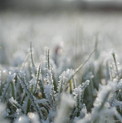 Enjoy your Sunday! (*Twinkel*'s photostream) Tags: winter nature grass natuur gras c1 vorst rijp justcropped berekoud