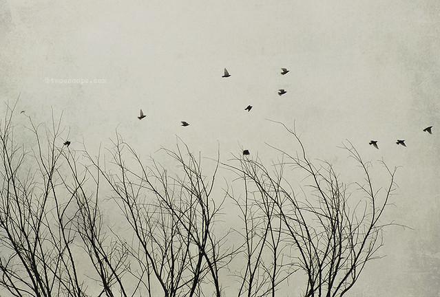 fleeing November 334/365