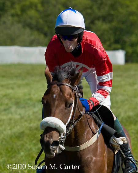 Paddy Young, Love Colony, steeplechase horse racing