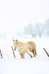 Carpe Diem .... (Ewa Ciebiera - Dewberry Parfum) Tags: winter horse white snow cold love switzerland heart hiver serenity neige whitechristmas zima blanc dewberry laneige parfum winterch wintereurope dewberryparfum ewaciebieraphotography ewaciebiera dewberryparfumphotography