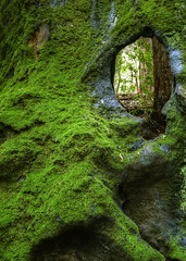 Redwood Eye (andertho) Tags: trees green forest moss cool hole stump redwood uncool sfist califonia cool5 cool3 cool6 cool4 cool7 uncool2 uncool3 uncool4 uncool5 iceboxcool