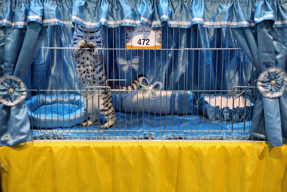 513 Выставка кошек в Англии