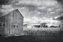 Vintage country (lorakaram) Tags: sky field birds barn corn connecticut