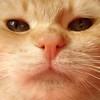 miaooo... -i poffarelli- (archifra -francesco de vincenzi-) Tags: italy macro cat chat sony gato gatto ciccio ohhh molise isernia carlzeiss abigfave oreengeness flickraward archifraisernia francescodevincenzi
