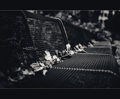 Leafy Suburbs (Dkillock) Tags: autumn blackandwhite bw white david black fall monochrome leaves 35mm canon germany bench happy deutschland eos wire dof open angle bokeh mark frankfurt f14 wide bank wideangle full ii frame 5d usm split fullframe monday benches ef mkii wideopen toning hbm llens benching canonef35mmf14lusm killock 5dmarkii 5d2 5dmkii benchmondays dkillock davidkillockphotography
