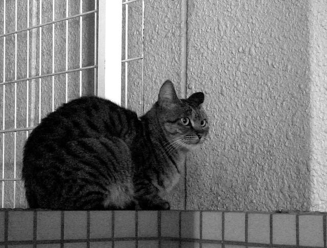 Today's Cat@2010-12-09