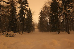 The Call (Es) Tags: winter snow nature forest call prague calling