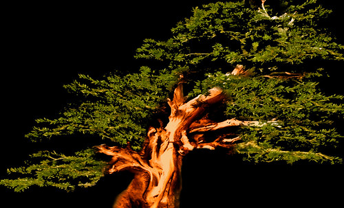 """Bonsai034 • <a style=""""font-size:0.8em;"""" href=""""http://www.flickr.com/photos/30735181@N00/5261341231/"""" target=""""_blank"""">View on Flickr</a>"""