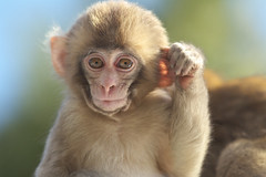 How are you? (Masashi Mochida) Tags: baby monkey awaji naturesfinest coth supershot rubyphotographer coth5