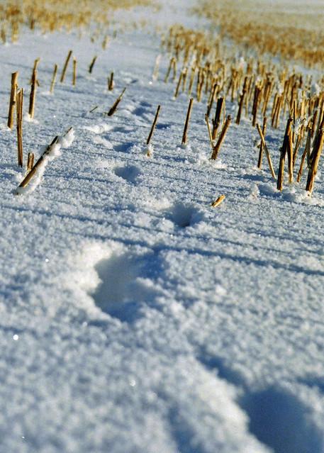 snow canada film field 35mm december pentax tracks journey alberta 2010 sooc mortalmuses