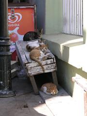 The Dalton Cats :) (CyberMacs) Tags: animal cat turkey market türkiye kitty istanbul törökország bazaar han kedi constantinople longshot highquality çarşı çarsi oneface