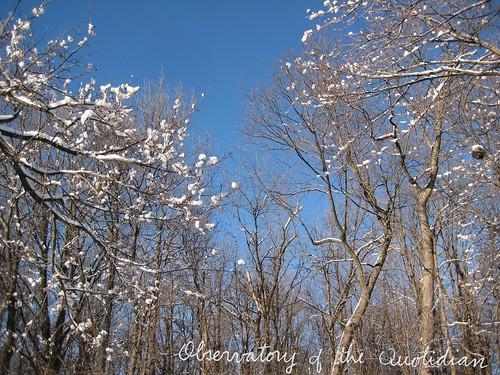 Snowclad Trees
