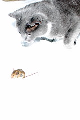 mouse carnivore christmasgift taggart