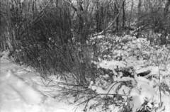 Winter (hpulley) Tags: winter blackandwhite film waterloo expired ilforddelta400 canonftbn ilfotecddx ilfostop ilfordrapidfixer yellow8filter ilfotol canonfd35mmf2sscii